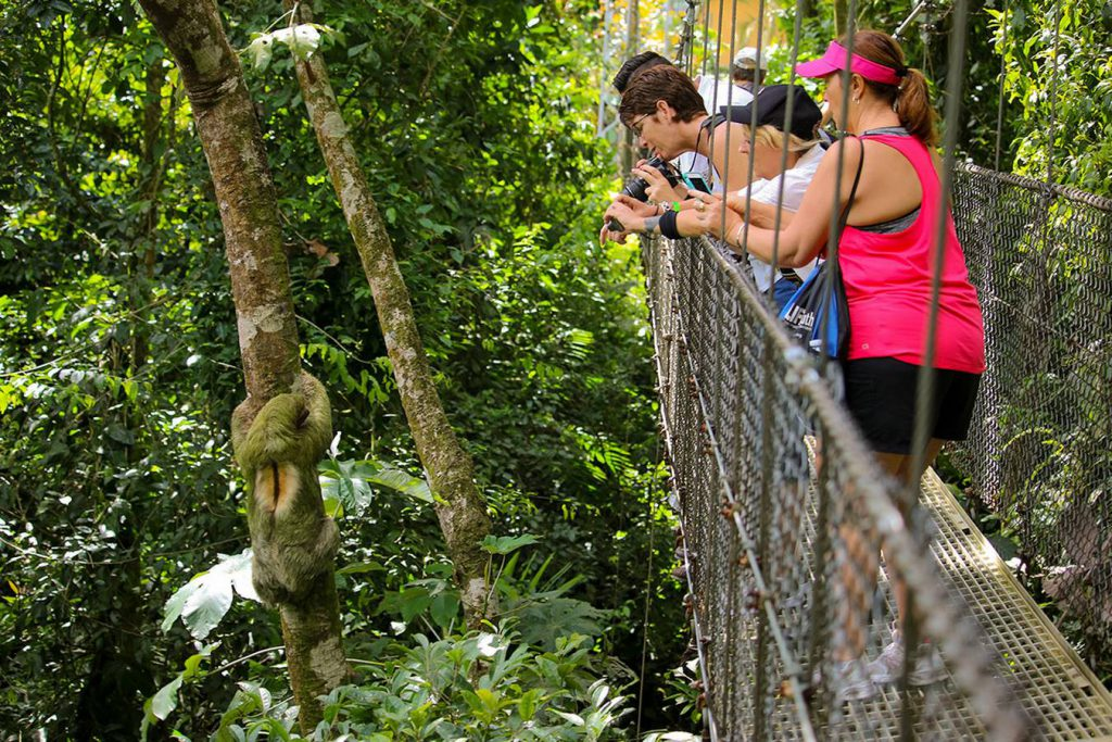 Arenal Volcano Rain Forest Hanging Bridges Tour